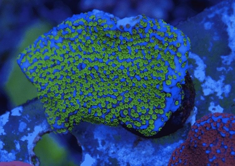 Reef Aquariums – How to Set-Up a Fantastic Reef Aquarium for Your coral frags
